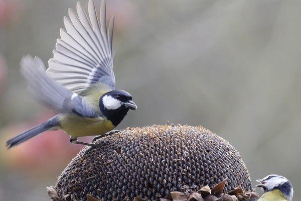 En 20 ans, la biodiversité a pris du plomb dans l'aile. Les oiseaux sont en train de disparaître.