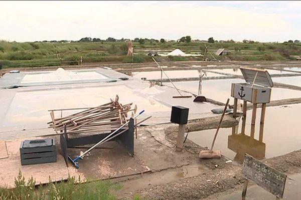 De violents orages ont noyé les œillets sous 10 cm d'eau