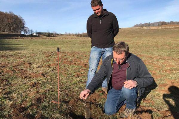 Dans le Cantal, les agriculteurs sont désemparés face à la pullulation des rats taupiers.
