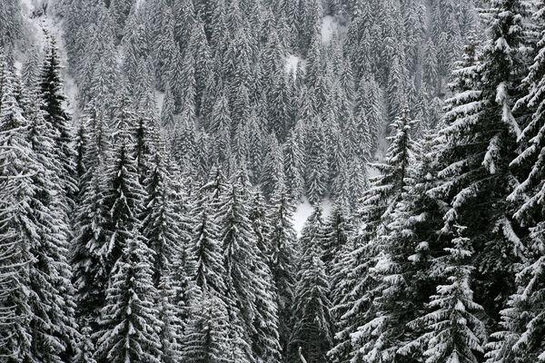 La neige est de retour, vendredi 29 décembre, dans dix départements de la région Auvergne-Rhône-Alpes.