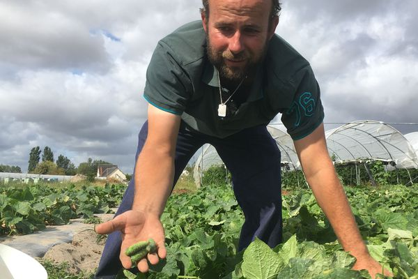 Fabien Biette, agriculteur à Soings-en-Sologne s'est lancé dans la culture de cornichons l'an dernier