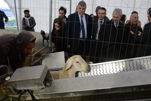 Un mouton dans une chaîne d'abattage en Seine-Saint-Denis, lors de l'Aïd el-Kébir 2012.