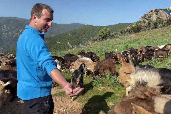 Installé sur la commune d'Ocana depuis 1996, Jean-Dominique Muraccioli a tiré a appris le métier de son père, déjà éleveur avant lui.