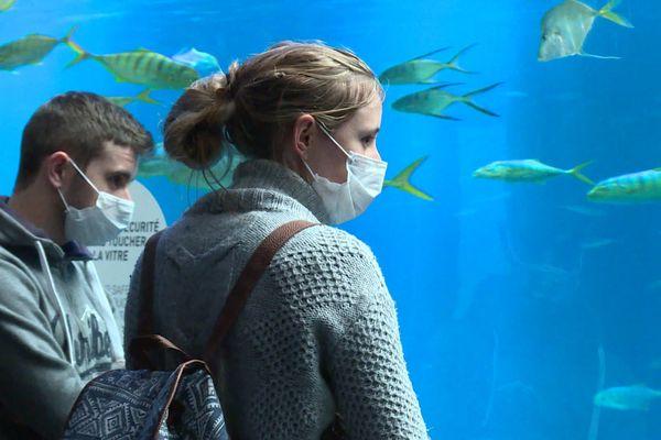 Les premiers visiteurs ont fait leur retour à Nausicaà où le port du masque est devenu obligatoire.