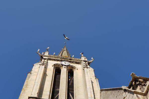 Des cigognes aperçues sur l'église de Creil dans l'Oise lundi 14 septembre 2020