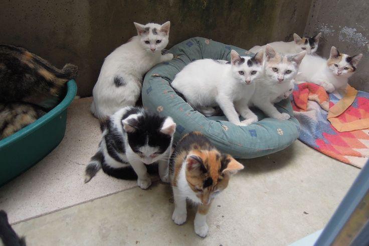 Vesoul Une Association De Protection Animale Debordee Par Les Chats