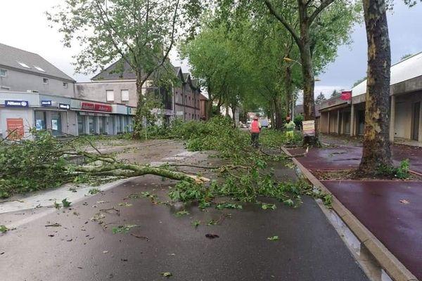 Plusieurs arbres ont été arrachés ou endommagés du fait de l'orage dans le secteur de Gray.
