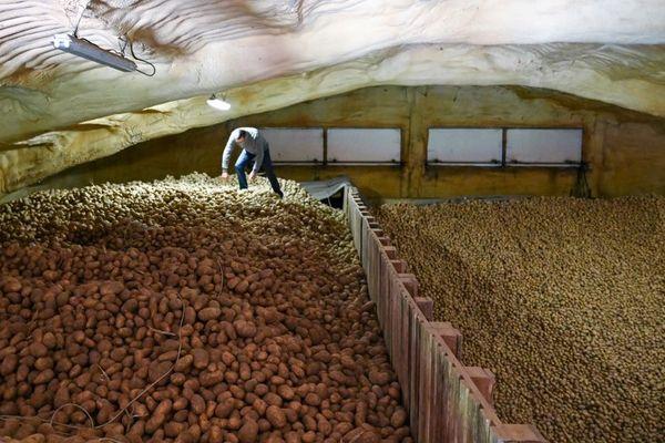 150 tonnes d'invendus pour Christophe Delebarre, producteur de pommes de terre à Richebourg (Pas-de-Calais).