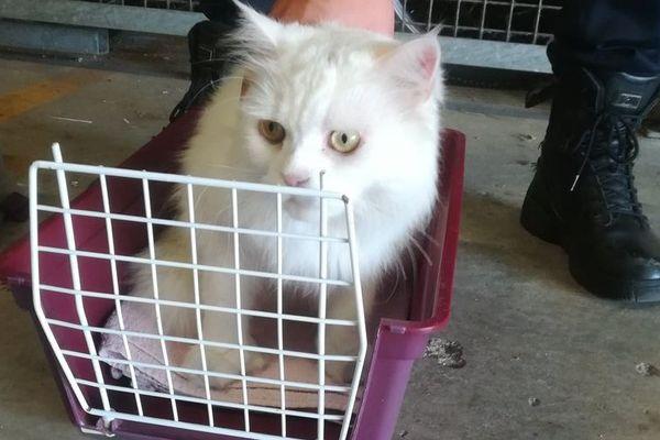 Ce chat a été trouvé par un riverain rue de Provence à Nantes