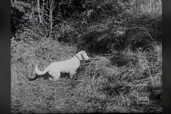 Robot, le chien de Marcel Ravidat est le premier des inventeurs de la grotte... après le lapin qu'il poursuivait !