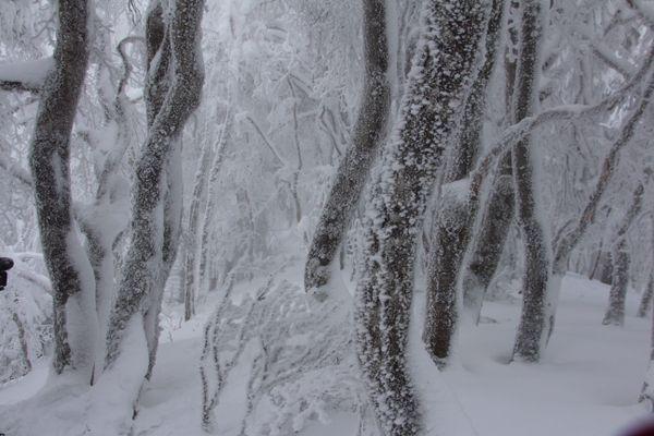 La forêt magique sur les flancs du puy Montchal