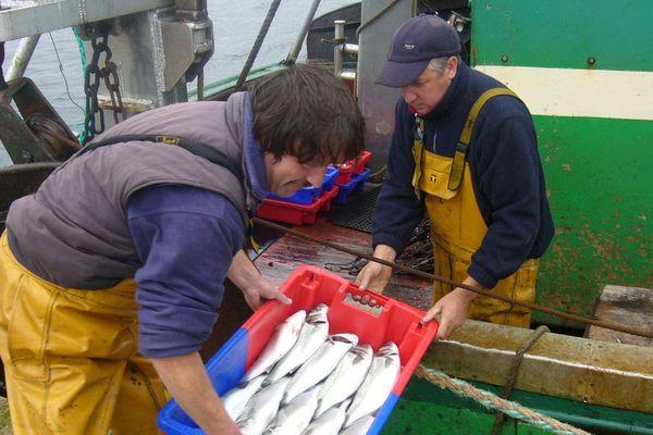Sur le bar, la pêche commerciale va rester interdite à quelques exceptions.
