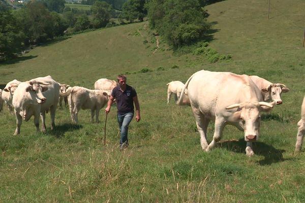 Pour les éleveurs de viande bovine de la région, l'accord UE-Mercosur sur les importations sud-américains pourraient être désastreux