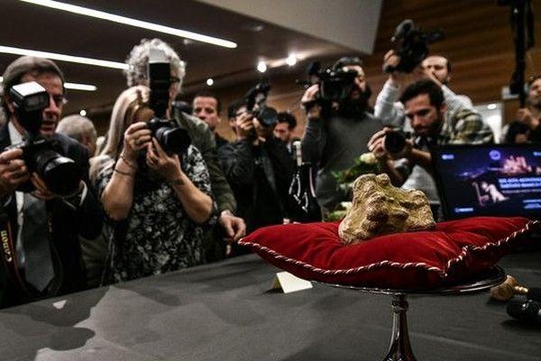 Italie: une truffe blanche d'Alba vendue 85.000 euros.