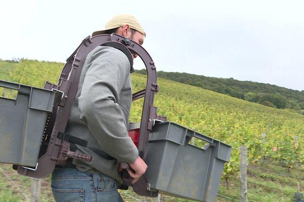 Une cagette devant, une derrière : le sherpa permet aux porteurs de répartir le poids des récoltes