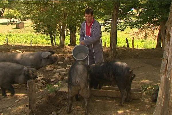 Terre de Liens lance un appel pour le développement d'un élevage de porcs bio