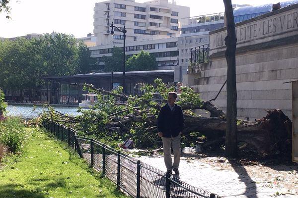 L'arbre n'a pas résisté aux rafales qui ont balayé la capitale dans la nuit du 7 au 8 juin 2019.