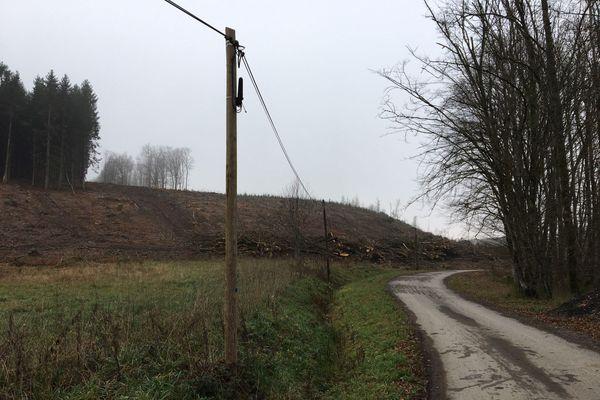 A proximité du Sautou, un hectare et demi de terrain a été déboisé pour faciliter les fouilles.