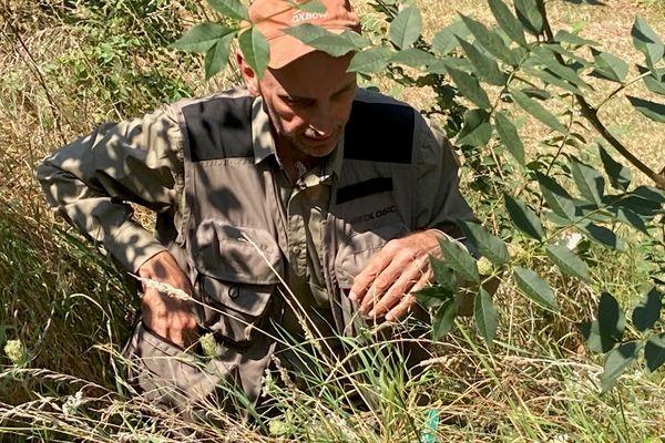 Jean-Claude Teyssier en observation dans l'herbe