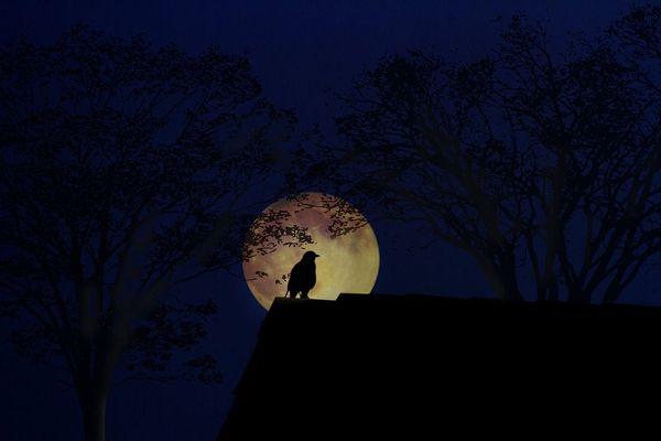 Les sons et les chants des animaux nocturnes se mêlent pour former une symphonie.