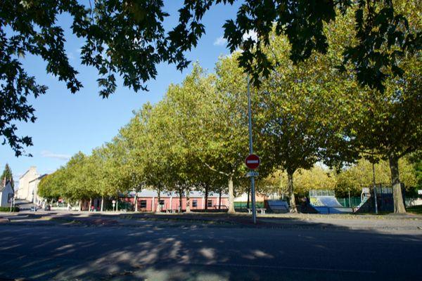 Ces platanes, situés avenue de la Crosse à Falaise, pourraient être abattus ou déplacés pour sécuriser les abords de la gare routière
