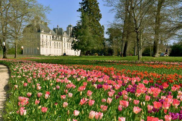 Le château de Cheverny et ses milliers de tulipes