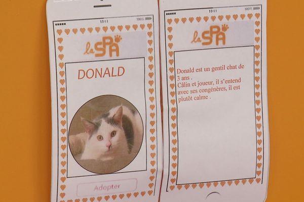"""En reprenant les codes des applications de rencontre, la SPA espère faire """"matcher"""" des animaux et des familles."""