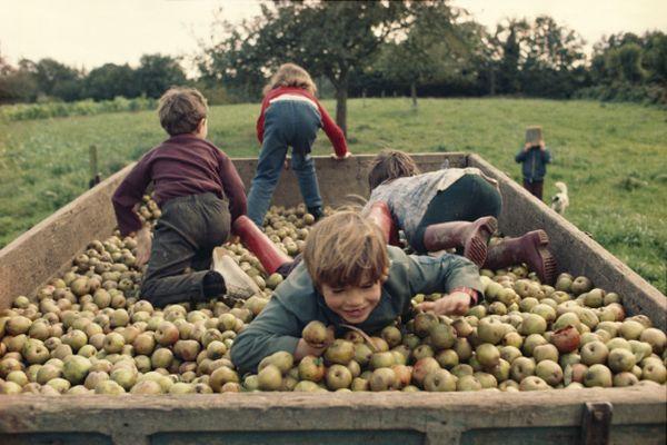 Pommes, pommes, pommes, pommes