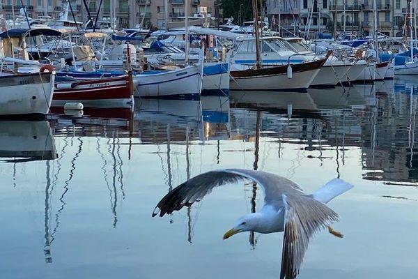 Le port de Cannes, calme en cette période de confinement.