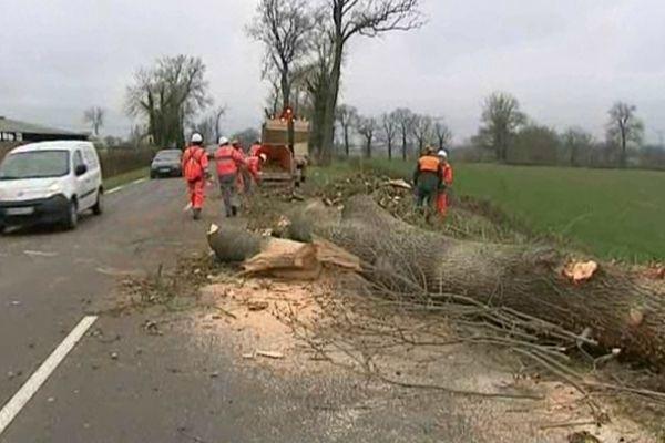 Jugés dangereux, des frênes de 50 ans d'âge sont abattus le long de la départementale 2009 dans l'Allier.