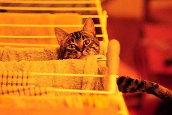 Pépite et une petite chatte facétieuse de 3 ans qui aime beaucoup de balader sur les toits de Bordeaux...