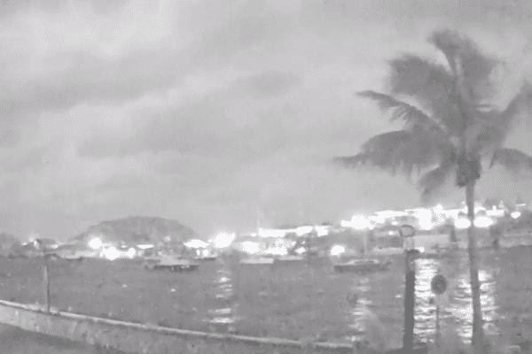 """""""Still standing #IrmaHurricane"""" - Sur les réseaux sociaux, il est en train de devenir le héros de l'ouragan Irma. L'arbre qui résiste aux vents sur le port de Gustavia à Saint-Barthélemy a été baptisé Hector. Il a désormais son propre compte Twitter"""