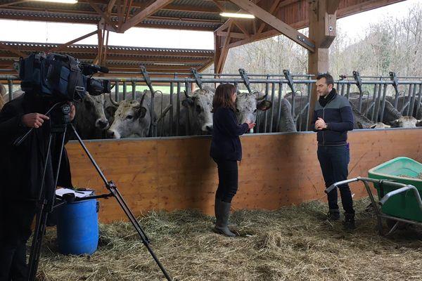Ferme Lacube en Ariège, Magali Lacube et Mickaël Potot entourés de vaches gasconnes pyrénéennes