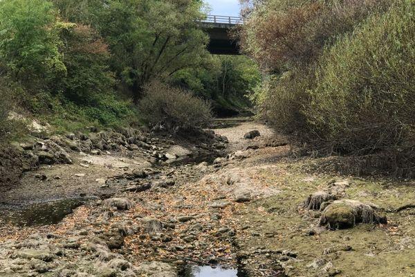 La rivière la Tille, en Côte-d'Or, est à sec depuis plusieurs semaines en raison de la sécheresse.