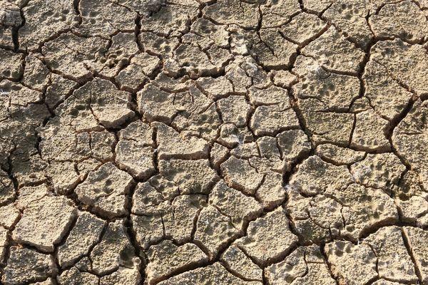 C'est l'une des nombreuses conséquences des sécheresses de plus en plus fréquentes : la production laitière est fortement impactée par ces aléas climatiques.