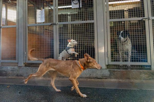 Une proposition de loi va être présentée à l'Assemblée nationale pour lutter contre la maltraitance animale.