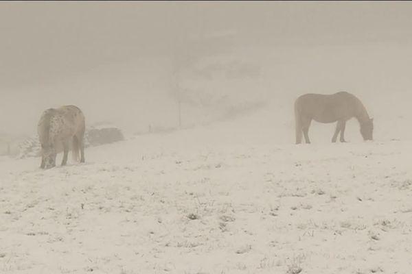Le froid peut avoir de multiples conséquences sur les animaux.