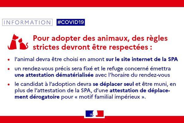 Une dérogation particulière pour l'adoption des animaux pendant le confinement