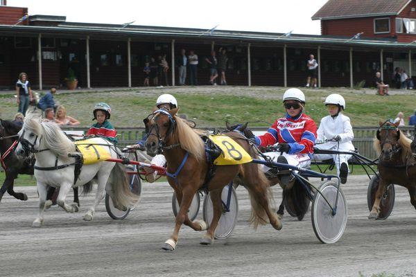 Course de poneys attelés