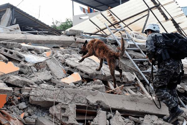 Sauveteur intervenant à Manta, province de Manabi, après le séisme en Equateur