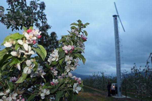 Des petites éoliennes sont mises en place dans certaines exploitations pour lutter contre le gel de printemps.