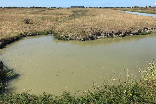 Situation de crise dans le marais Breton à la limite de la Loire-Atlantique et de la Vendée, l'eau manque en dépit d'un été 2021 pluvieux