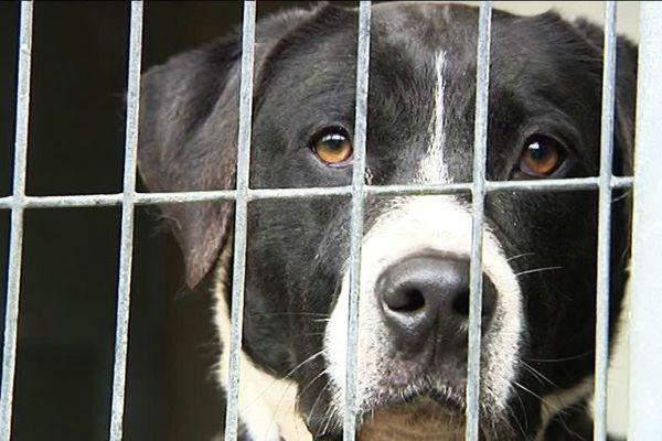 Au refuge de Luynes en Indre-et-Loire, plus de 90 animaux attendent d'être adoptés
