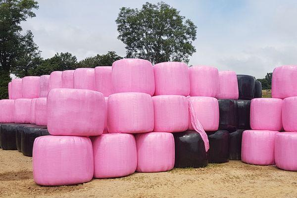 Des agriculteurs du sud-ouest du Cantal participent à la lutte contre le cancer en enrubannant les bottes de foin avec du film rose.