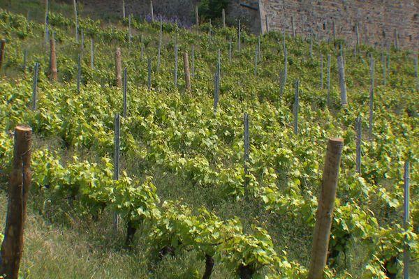 Beaujolais : le vignoble