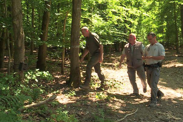 Des agents de l'OFB, de l'ONF ou de la direction des territoires de Seine-Maritime sont chargés de faire des relevés et des enquêtes sur la présence du loup, comme ici en juillet 2020 dans le Pays-de-Bray.
