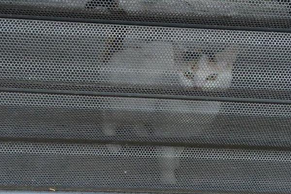 Sortie d'affaire par l'employée de l'école, la chatte a ensuite été récupérée par des riverains.