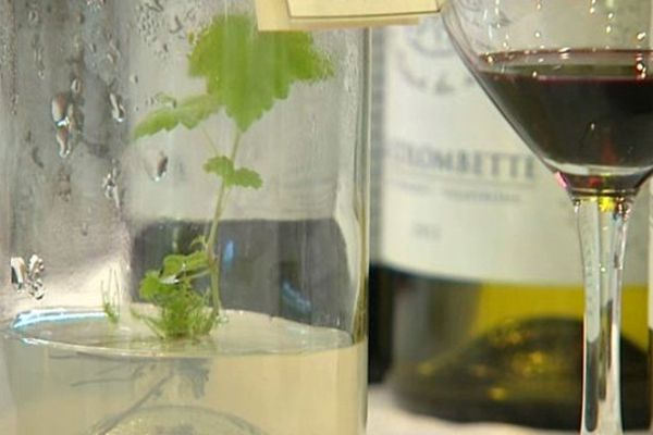 Ce salon vinicole 100 % bio rassemble 700 exposants