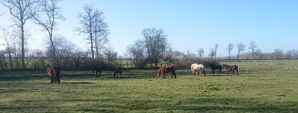Des chiens, mais également des chevaux, des ânes et des chats