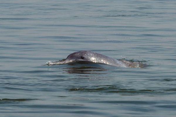 Un dauphin mort a été repêché à Nice. Image d'illustration.